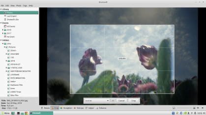 Shotwell cropping tool offers several presets to rapidly crop a picture